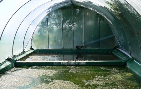 Copyright : Daniel Garcia/CEA <br /> Bassins de traitements des eaux contaminées par des produits phytosanitaires contenant un mélange de bactéries photosynthétiques.